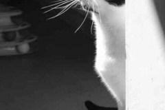 Chenzou-Black-and-White-Portrait-1
