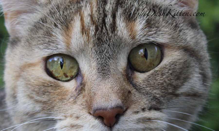 Dot Kitten © Marjorie Dawson DashKitten.com 2019