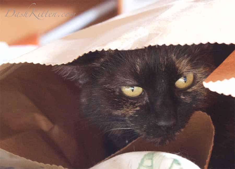 Sienna the Paper Bag Princess © Marjorie Dawson DashKitten.com 2019