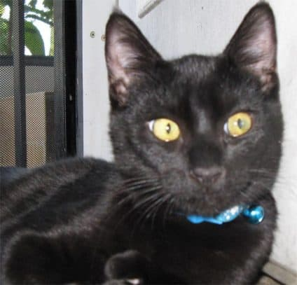Panky the Panfur Cat Blogger Worldwide Pet Blogger