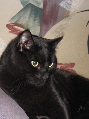 Pensive black cat