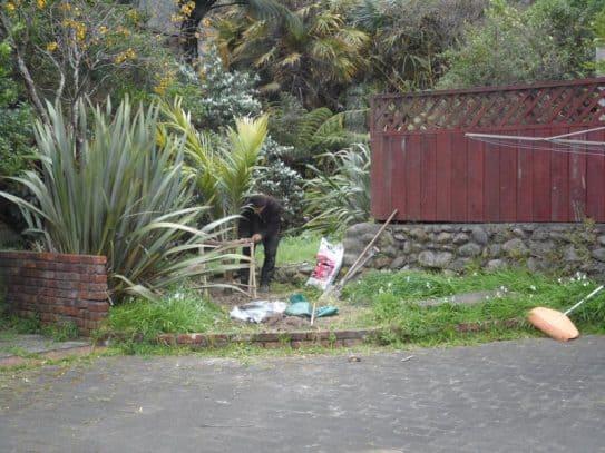 Dash Kitten Memorial