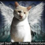 Dash Kitten Memorial Image Love