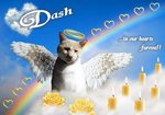 Angel Dash Kitten Memorial Image 1