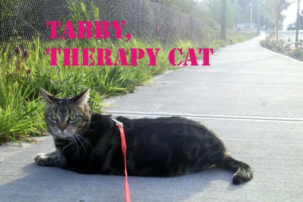how to get a therapy cat