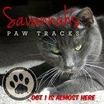Savannah's Paw Tracks