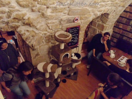 Cat Cafe Downstairs 2