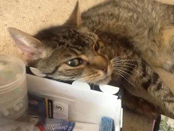 Nemo the senior cat Hospice Care