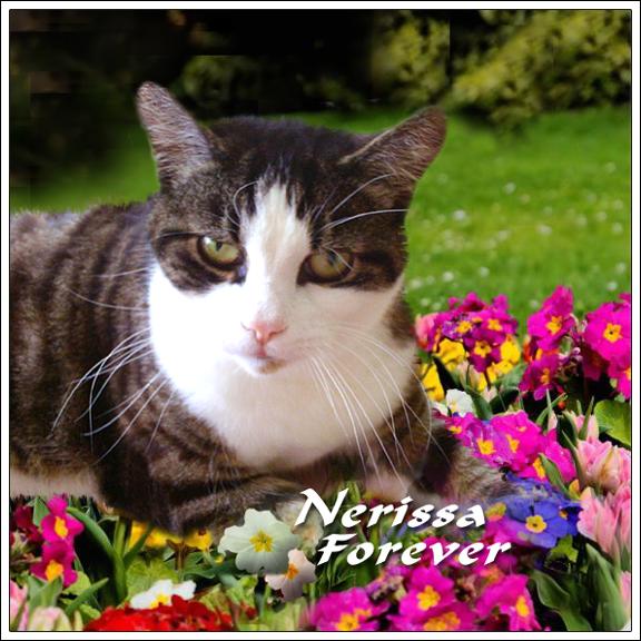 Nerissa, Forever (1)