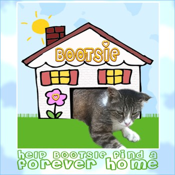 Bootsie Needs A Forever Home (Facebook Size)