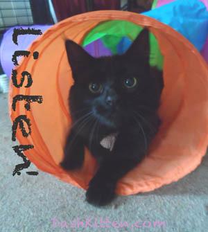 Phoebe from Dash Kitten