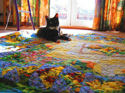 Cute Cat on a Lovely Quilt