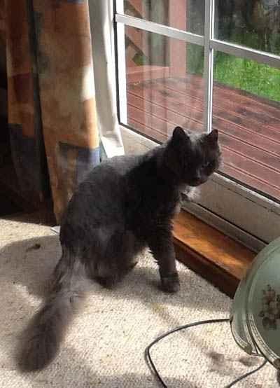 Dusty on Dash Kitten Blog