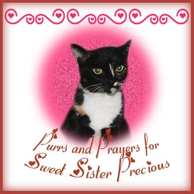 Purrs and Prayers for Sister Precious