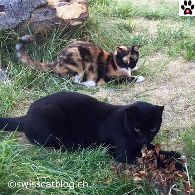The Swiss Cats Worldwide Cat Bloggers
