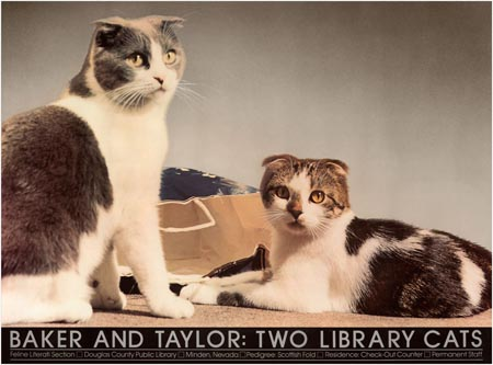 library cats
