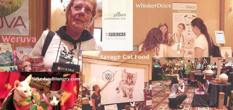 BlogPaws Report from Dash Kitten