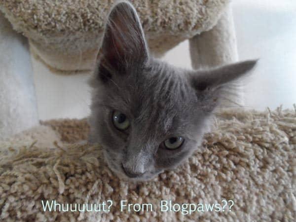 Blogpaws keeps on giving