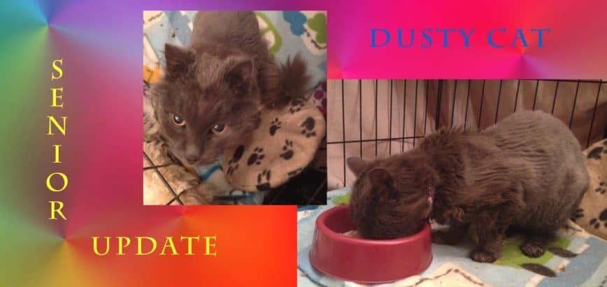 Senior Cat Update from Dusty