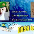 Dash Kitten memorial graphic