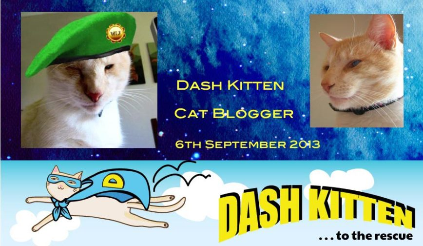 Three Years Ago Today – Dash Kitten