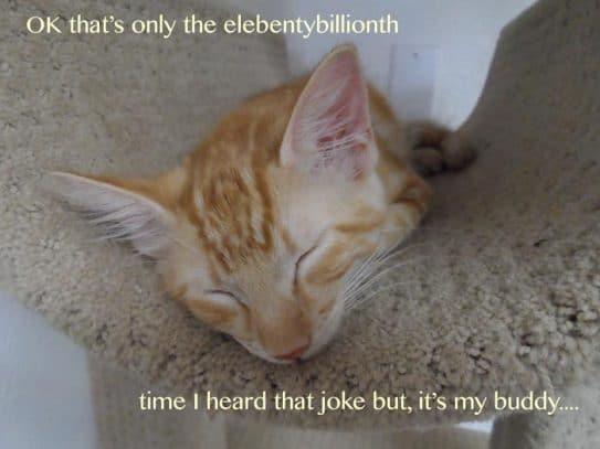 Online Friendship Picture of kitten asleep