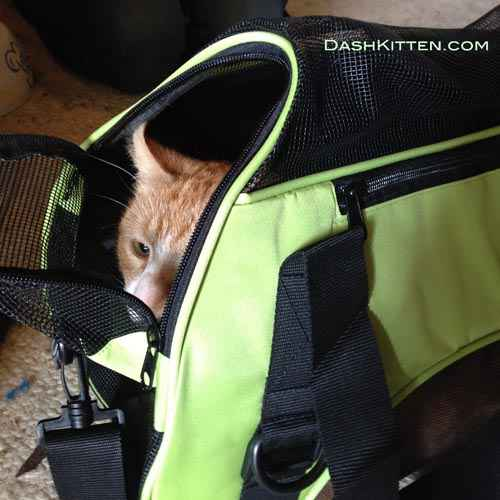 Ginger cat in carrier
