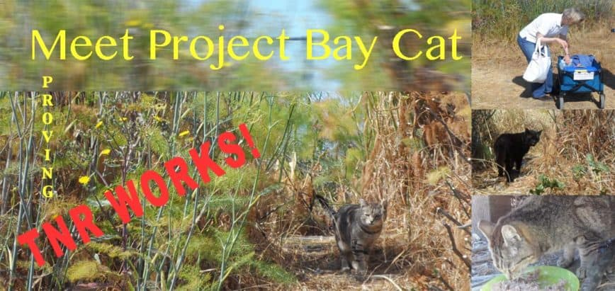 Project Bay Cat Showing TNR Works