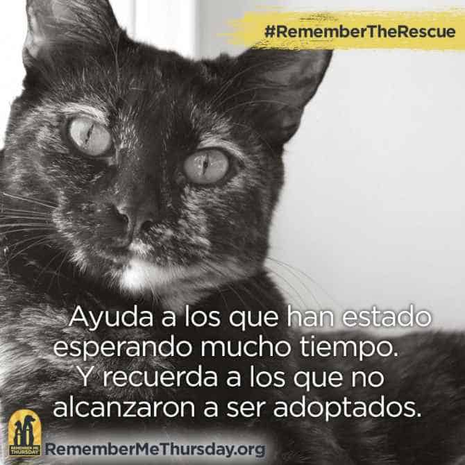 #RememberTheRescue IS worldwide - There areshareable images in Spanish and German text.