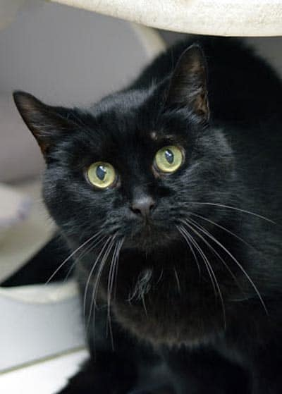 PAWS plays host to Clyde the black cat