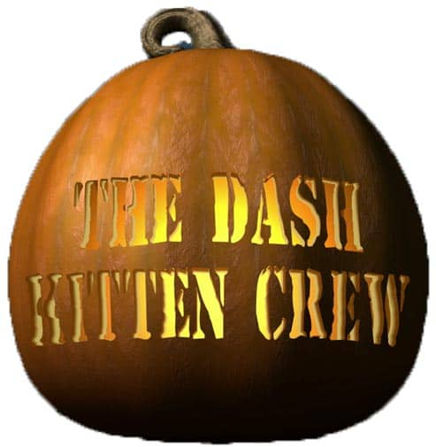 Vist Dash Kitten's YouTube Channel