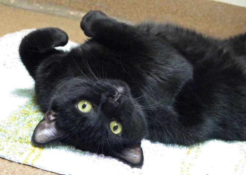 Black cat on black cat appreciation day