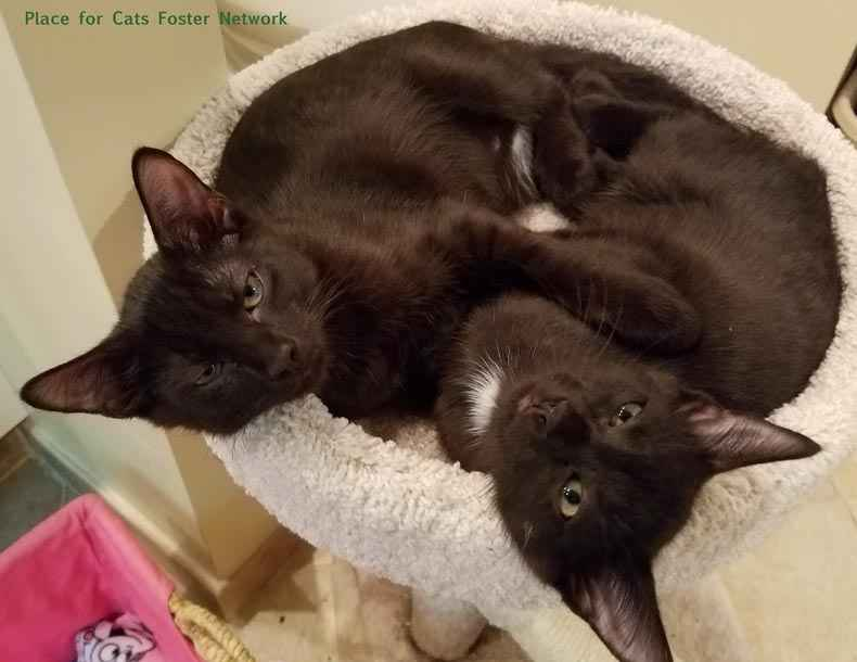 Black Cat Love Place for Cats Black Cats