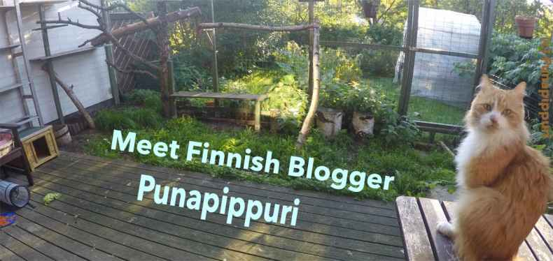 Punapippuri Finnish cat blogger