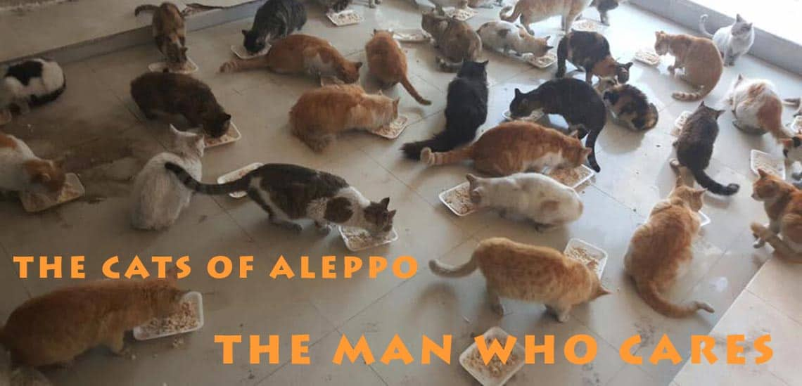 The Cats of Aleppo eating