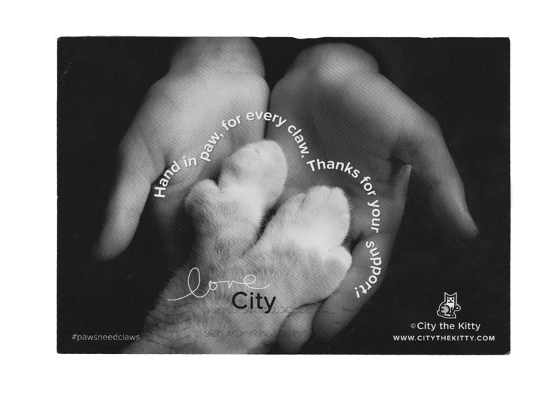 City thre Kitty anti declawing cat hero