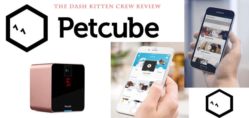 Petcube Magic Keeps Families and Pets Connected