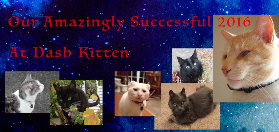 Image of Dash Ktten Cats