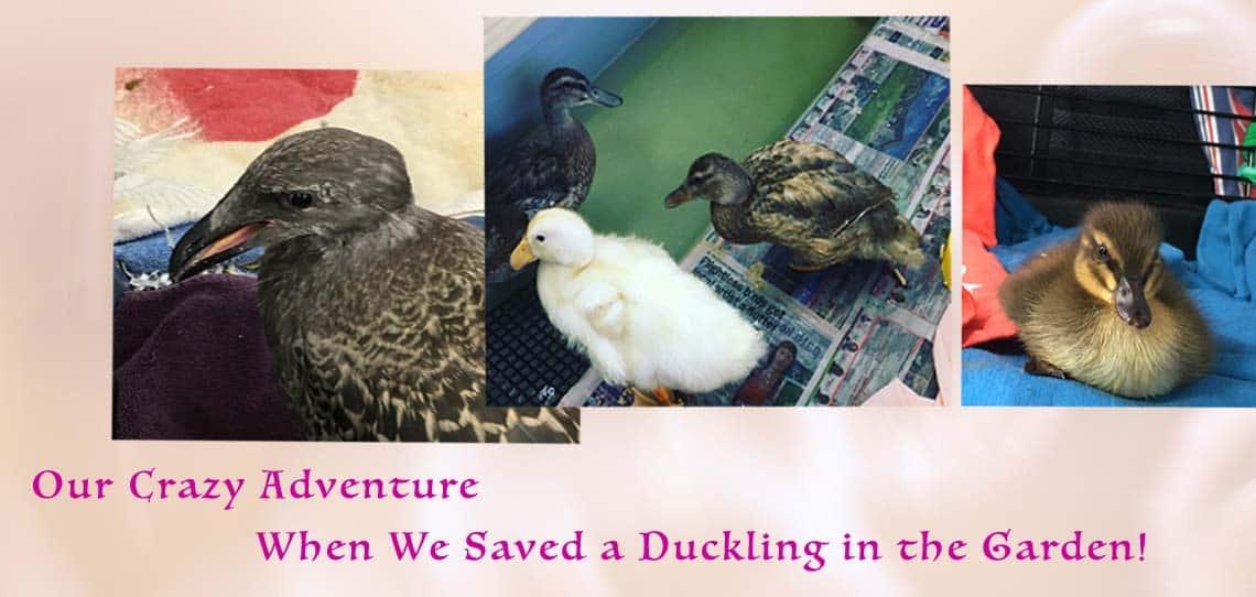 Rescue Ducks in a safe crate