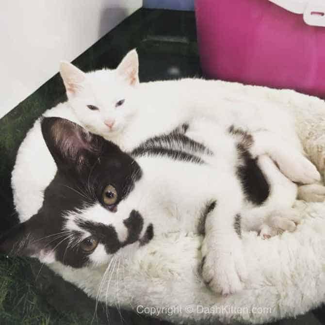 Sunday Selfie Animates Kittens