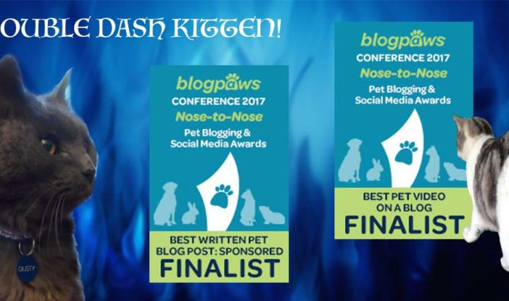 BlogPaws 2017 Finalist