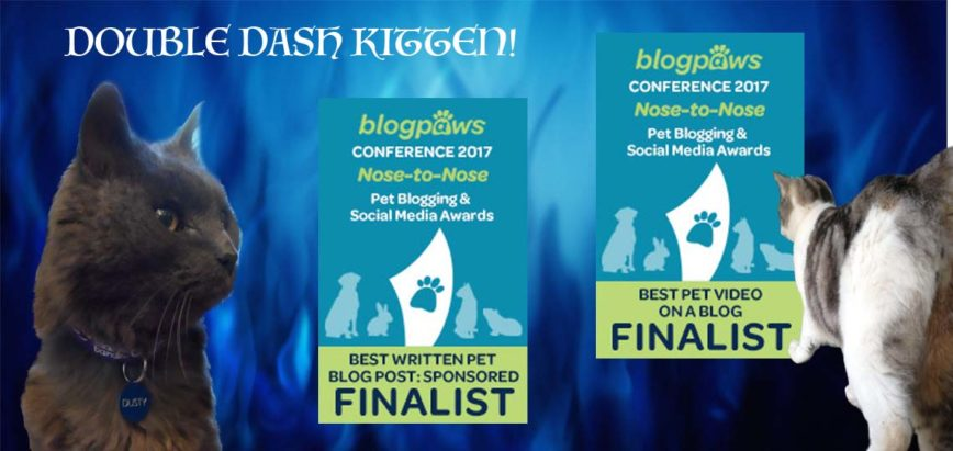 BlogPaws 2017 First Impressions