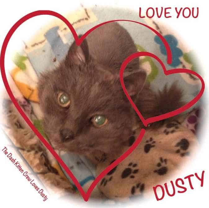 Dusty's Update