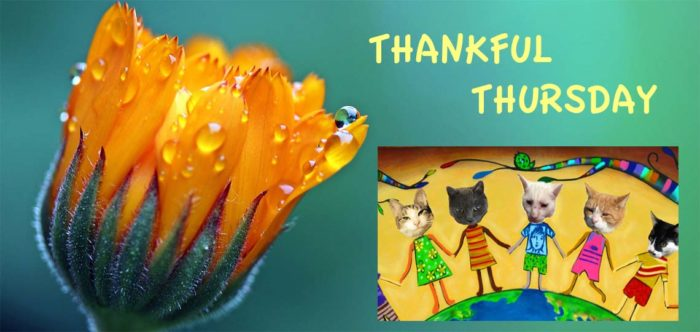 THANKFUL THURSDAY Graphic