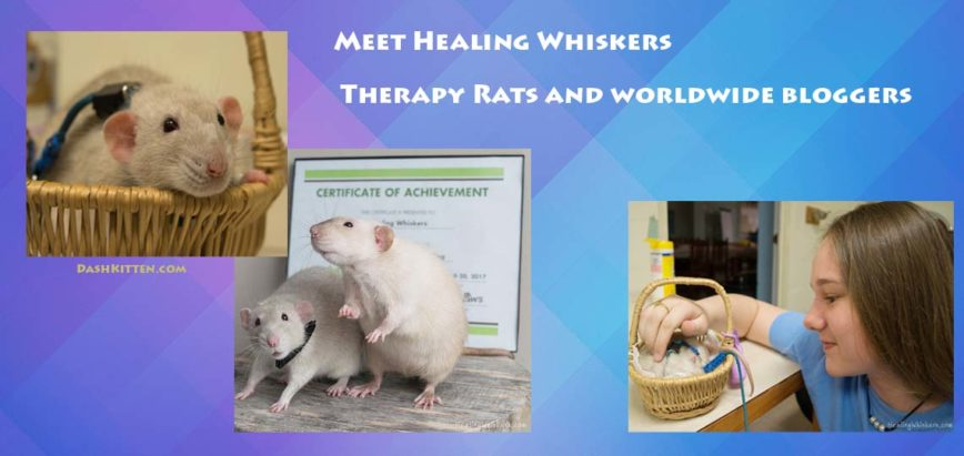 Meet Healing Whiskers Therapy Rats