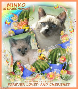 A Selfie of Miranda Kitten RIP Minko