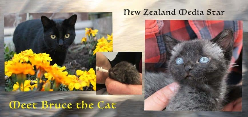 Bruce The Cat a New Zealand Interview