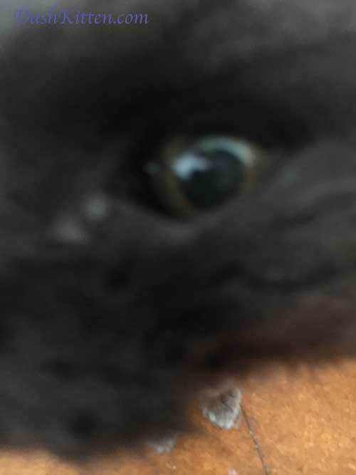 Dusty's Eye close up