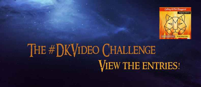 Dash Kitten Video Challenge