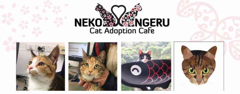 Neko-Ngeru Banner from FB Page